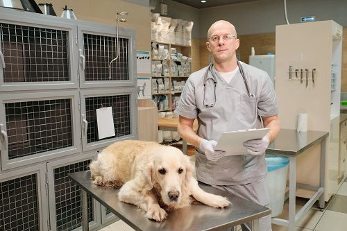 les différents soins pour animaux de compagnie